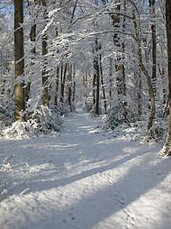 La forêt de Tronçais sous la neige