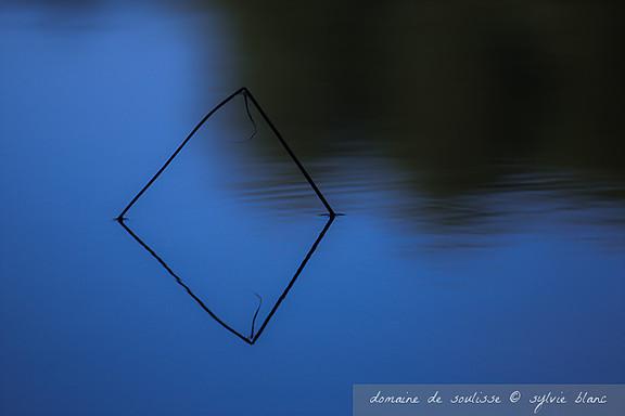 Reflet d'une herbe sur l'étang de Soulisse