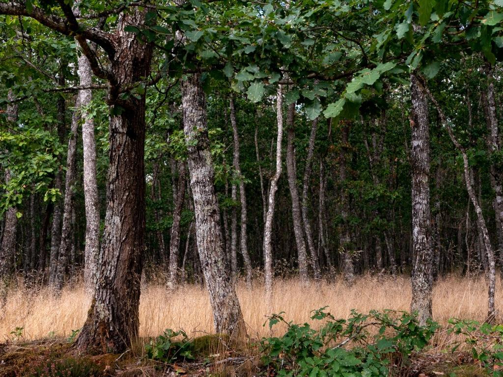 Forêt de Tronçais, la plus grande chênaie d'Europe